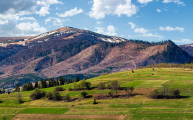rural fields on a grassy hillside in springtime. mountain with snowy tops in the distance of beautiful countryside