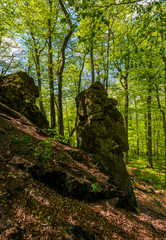 rocky formation among the green forest