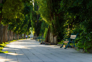 chestnut alley with benches in summertime