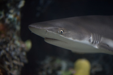 The small shark floats near a bottom