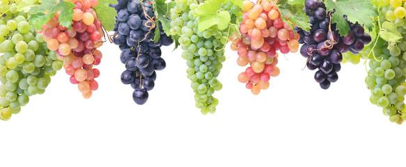 Grape fruit Fototapete