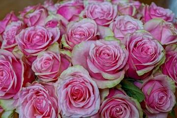 Blumenstrauß aus pinken Rosen