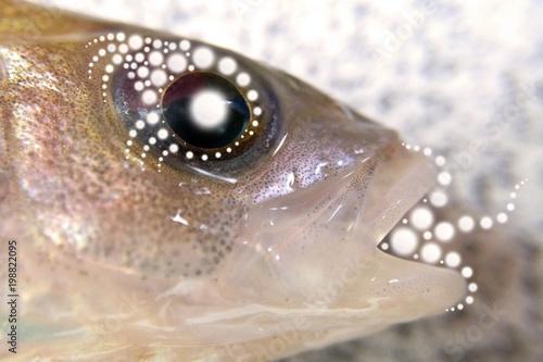 Fish Head Patterns Light Energy Prana Stockfotos Und Lizenzfreie