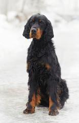 Portrait dog against white snow background