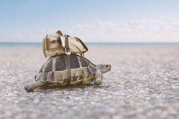 Turtle with backpack.