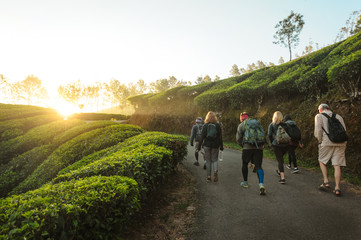 International Group of travelers with backpacks going by trail through tea plantations at sunrise