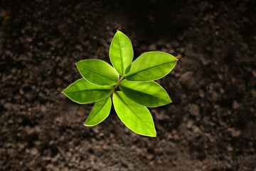 Top view of green sprout growing out from soil