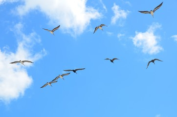 seagulls, flying, wildlife, waterbird, nature, sky, landscape, outdoors, background, avian