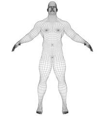 Wire frame athlete body on white background