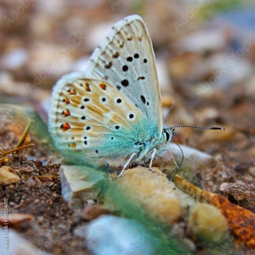 Blue butterfly macro photo