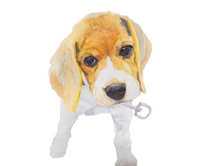 Beagle ,Dog Watercolor painting. Watercolor hand painted cute animal illustrations.