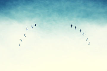 surreal enigmatic picture of flying birds . minimalism and dream concept