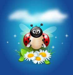 Ladybug on daisy flowers