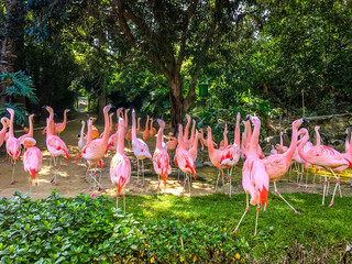 Group of pink flamingos among green trees. Exotic