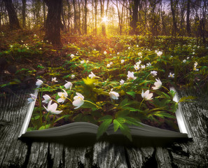Many spring flowers on the pages of an open book