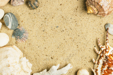 Shells and stones on the sand with a free place.