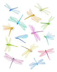 Summer Dragonflies. Flying  Dragonfly. Watercolor drawing. Summer Illustration