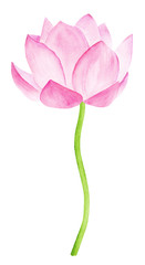 Beautiful Pink Lotus Flower. Watercolor illustration. Pure Water Blossom. Yoga, Zen Meditation Symbol. China and Japan Symbol.