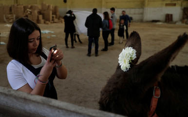 "A girl takes a picture of a donkey before she takes part in the procession of the ""Virgem da Atalaia"" during Holy Week in Alcochete"
