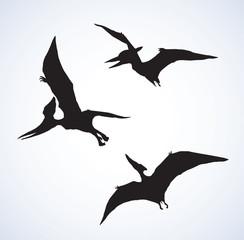 Pterodactyl. Vector drawing