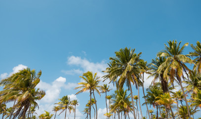 palm trees and blue sky - palm tree  background -