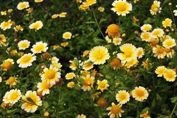 Flowers of vegetable plant