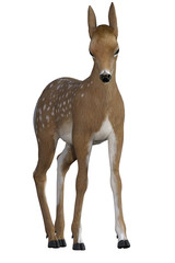 Red baby deer / fawn isolated on white, 3d render.
