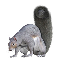 Grey Squirrel isolated on white, 3d render
