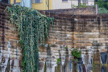 Hanging vines growing down city sandstone wall