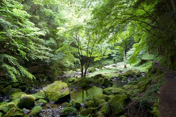 Akame 48 Waterfalls: Mystic scenery with giant trees & huge moss covered rock formations, untouched nature, lush green vegetation, cascading waterfalls & natural pools in rural Japan near Osaka