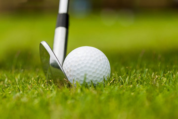 Close Up of Golf club and golf ball on green grass ready to hit.