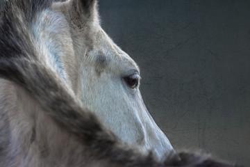 Head of a horse close-up