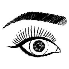 sexy eye female with eyebrow