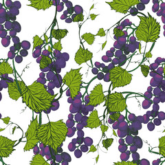 Seamless grapes background.Hand drawn illustration