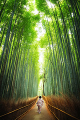 Photo sur Plexiglas Bamboo Geisha walking through the bamboo grove Kyoto