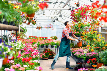 Gärtner arbeitet im Gewächshaus einer Gärtnerei mit bunten Blumen und Zierpflanzen - Verkauf im Blumengeschäft