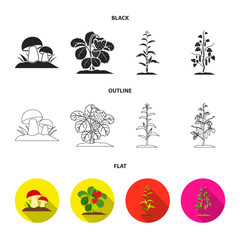 Mushrooms, strawberries, corn, cucumber.Plant set collection icons in black,flat,outline style vector symbol stock illustration web.