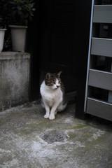 街で出くわした猫