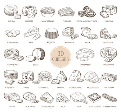 Set of isolated sketches of cheese types
