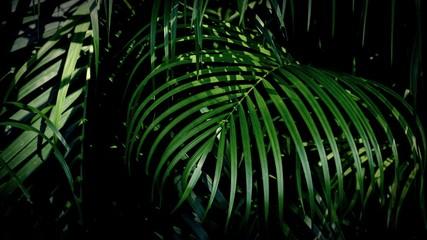 green palm leaf wall