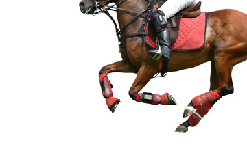Isolated image of Horse polo Running in polo