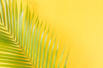 Flat lay photo coconut leaf on yellow background , top view and copy space for montage your product
