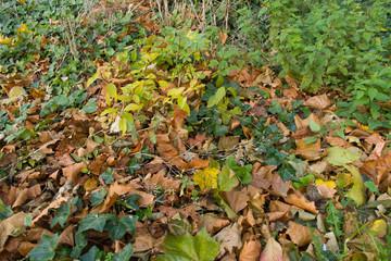 Forest Ground Texture