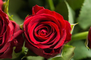 Bouquet with red roses on the rustic background. Shallow depth of field.