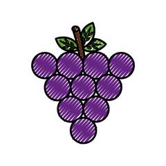 fresh grapes fruit healthy food vector illustration design