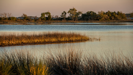 a bayou or marsh scene at dusk with a coastline and water.