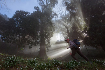 Travelers walking in fog forest