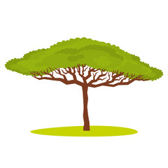 African Acacia tree Vector