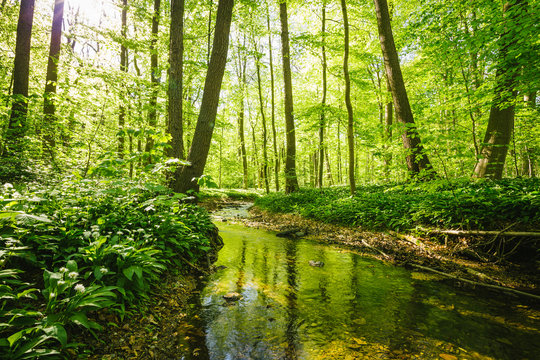 Kleiner Fluss fließt durch einen grünen saftigen Wald