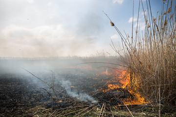 burning dry grass.